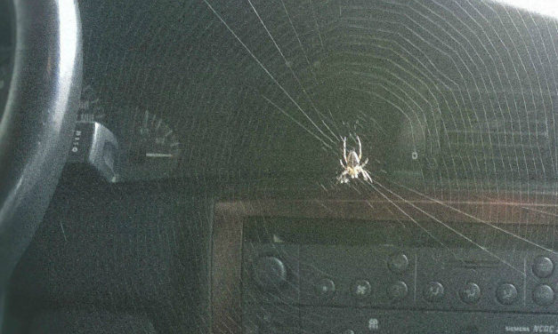 Ford To Protect Us From… Spiders?